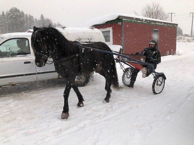 18 Januari – Tomas Brolin hälsar på hästen